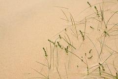 άμμος αμμόλοφων ανασκόπησης Στοκ φωτογραφία με δικαίωμα ελεύθερης χρήσης