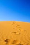 άμμος βημάτων αμμόλοφων Στοκ Εικόνα