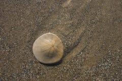 άμμος δολαρίων στοκ εικόνα