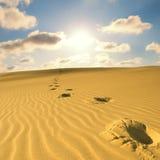 άμμος ερήμων Στοκ Εικόνες