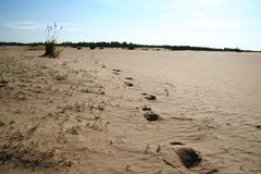 άμμος ερήμων στοκ εικόνα με δικαίωμα ελεύθερης χρήσης
