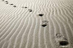 άμμος ιχνών ερήμων Στοκ εικόνες με δικαίωμα ελεύθερης χρήσης