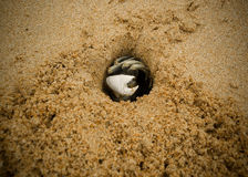 άμμος καβουριών Στοκ Εικόνες