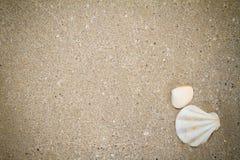άμμος και άσπρο κοχύλι Στοκ φωτογραφίες με δικαίωμα ελεύθερης χρήσης