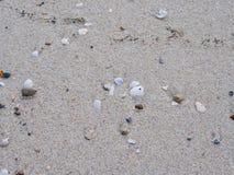 Άμμος και θαλασσινό κοχύλι Στοκ φωτογραφία με δικαίωμα ελεύθερης χρήσης