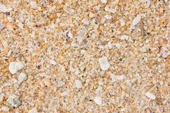 Άμμος και κοχύλια στην παραλία Στοκ Εικόνα