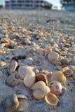 Άμμος και κοχύλια 2 Στοκ φωτογραφίες με δικαίωμα ελεύθερης χρήσης