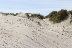 Άμμος και χλόη σε έναν αμμόλοφο Στοκ εικόνα με δικαίωμα ελεύθερης χρήσης