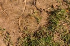 Άμμος και χλόη Στοκ φωτογραφία με δικαίωμα ελεύθερης χρήσης