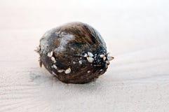 άμμος καρύδων Στοκ Εικόνες