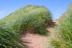 άμμος μονοπατιών αμμόλοφων Στοκ Φωτογραφία