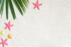 Άμμος παραλιών με τα starfishs, τα κοχύλια και τα φύλλα καρύδων στοκ φωτογραφία με δικαίωμα ελεύθερης χρήσης