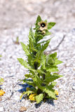 άμμος πράσινων φυτών Στοκ φωτογραφία με δικαίωμα ελεύθερης χρήσης