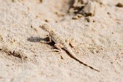 άμμος σαυρών Στοκ Φωτογραφία