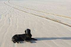 άμμος σκυλιών Στοκ Εικόνες
