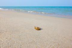 Άμμος στην παραλία Στοκ φωτογραφίες με δικαίωμα ελεύθερης χρήσης