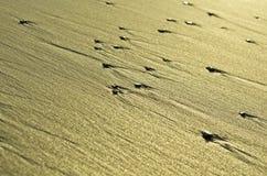 Άμμος του χρυσού Στοκ Εικόνες