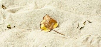άμμος φύλλων στοκ φωτογραφία με δικαίωμα ελεύθερης χρήσης