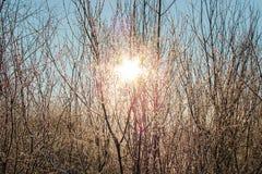 λάμπει ήλιος Στοκ εικόνα με δικαίωμα ελεύθερης χρήσης