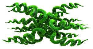 Άμπελοι εγκαταστάσεων πράσινες, σπείρα λοξά απεικόνιση αποθεμάτων