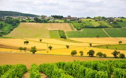 άμπελοι της Γαλλίας γεωργίας sancerre στοκ εικόνες με δικαίωμα ελεύθερης χρήσης