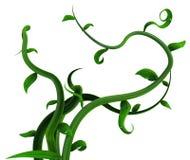 Άμπελοι φυτού πράσινες, δέσμη φύλλων ελεύθερη απεικόνιση δικαιώματος