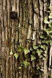άμπελος δέντρων Στοκ φωτογραφία με δικαίωμα ελεύθερης χρήσης