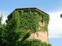 Άμπελος-καλυμμένος πύργος τούβλου Στοκ εικόνες με δικαίωμα ελεύθερης χρήσης