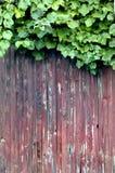 άμπελος σταφυλιών φραγών Στοκ εικόνες με δικαίωμα ελεύθερης χρήσης