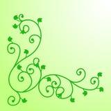 Άμπελος με τα φύλλα Στοκ εικόνα με δικαίωμα ελεύθερης χρήσης