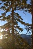 λάμποντας δέντρο ήλιων Στοκ φωτογραφίες με δικαίωμα ελεύθερης χρήσης