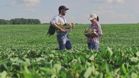 Άνδρας και γυναίκα με το κιβώτιο των λαχανικών στη μέση ενός πράσινου τομέα απόθεμα βίντεο