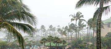 Άνεμοι τυφώνα και οδηγώντας βροχή με τους φοίνικες στοκ φωτογραφία