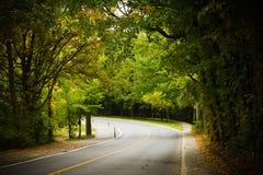 Άνεμος δρόμος καμπυλών ασφάλτου σε ένα δάσος οξιών Στοκ Εικόνες