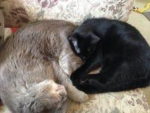 Άνετα γατάκια Στοκ φωτογραφίες με δικαίωμα ελεύθερης χρήσης