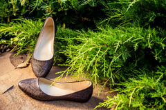 Άνετα παπούτσια μπαλέτου, snakeskin, γυναικεία παπούτσια στη φύση Στοκ Εικόνα