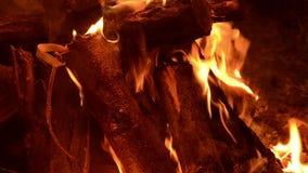 Άνετος λίγη καίγοντας κινηματογράφηση σε πρώτο πλάνο πυρκαγιάς απόθεμα βίντεο