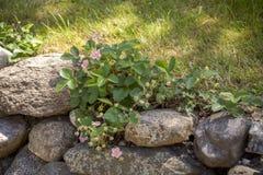 Άνετος κήπος με τα λουλούδια Στοκ Φωτογραφίες