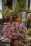 Άνετος κήπος με τα λουλούδια Στοκ Εικόνα