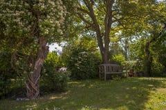 Άνετος κήπος με τα λουλούδια Στοκ Φωτογραφία