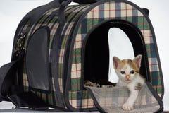 άνετο γατάκι σπιτιών σπορείων στοκ φωτογραφία