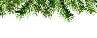 Άνευ ραφής άκρη κλαδίσκων πεύκων Στοκ εικόνες με δικαίωμα ελεύθερης χρήσης
