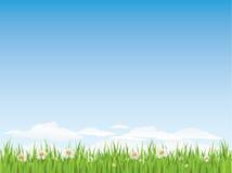 άνευ ραφής άνοιξη χλόης λουλουδιών διανυσματική απεικόνιση