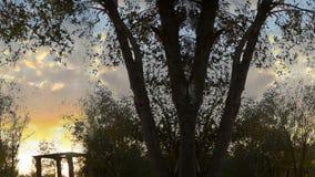Άνευ ραφής δέντρα του κήπου στο ηλιοβασίλεμα απόθεμα βίντεο