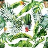 Άνευ ραφής απεικόνιση watercolor των τροπικής φύλλων, της ζούγκλας και της τέχνης κάκτων Στοκ φωτογραφία με δικαίωμα ελεύθερης χρήσης