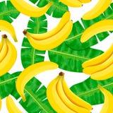 Άνευ ραφής απεικόνιση watercolor των τροπικών φύλλων, πυκνή ζούγκλα Το σχέδιο με το τροπικό μοτίβο καλοκαιριού μπορεί να χρησιμοπ Στοκ φωτογραφία με δικαίωμα ελεύθερης χρήσης
