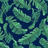 Άνευ ραφής απεικόνιση watercolor των τροπικών φύλλων, ζούγκλα Στοκ Εικόνες