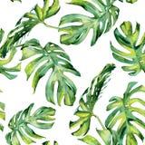 Άνευ ραφής απεικόνιση watercolor των τροπικών φύλλων, πυκνή ζούγκλα στοκ εικόνες με δικαίωμα ελεύθερης χρήσης