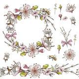 Άνευ ραφής βούρτσα, στεφάνι των λουλουδιών βερίκοκων στο διάνυσμα στο άσπρο υπόβαθρο διανυσματική απεικόνιση