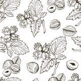 Άνευ ραφής διανυσματικό σχέδιο με το γραμμικό φουντούκι περιλήψεων Σκίτσα των καρυδιών στο εκλεκτής ποιότητας ύφος Στοκ Εικόνες